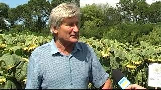 Посевной материал, который дает большие урожаи | Отзыв Сады Украины