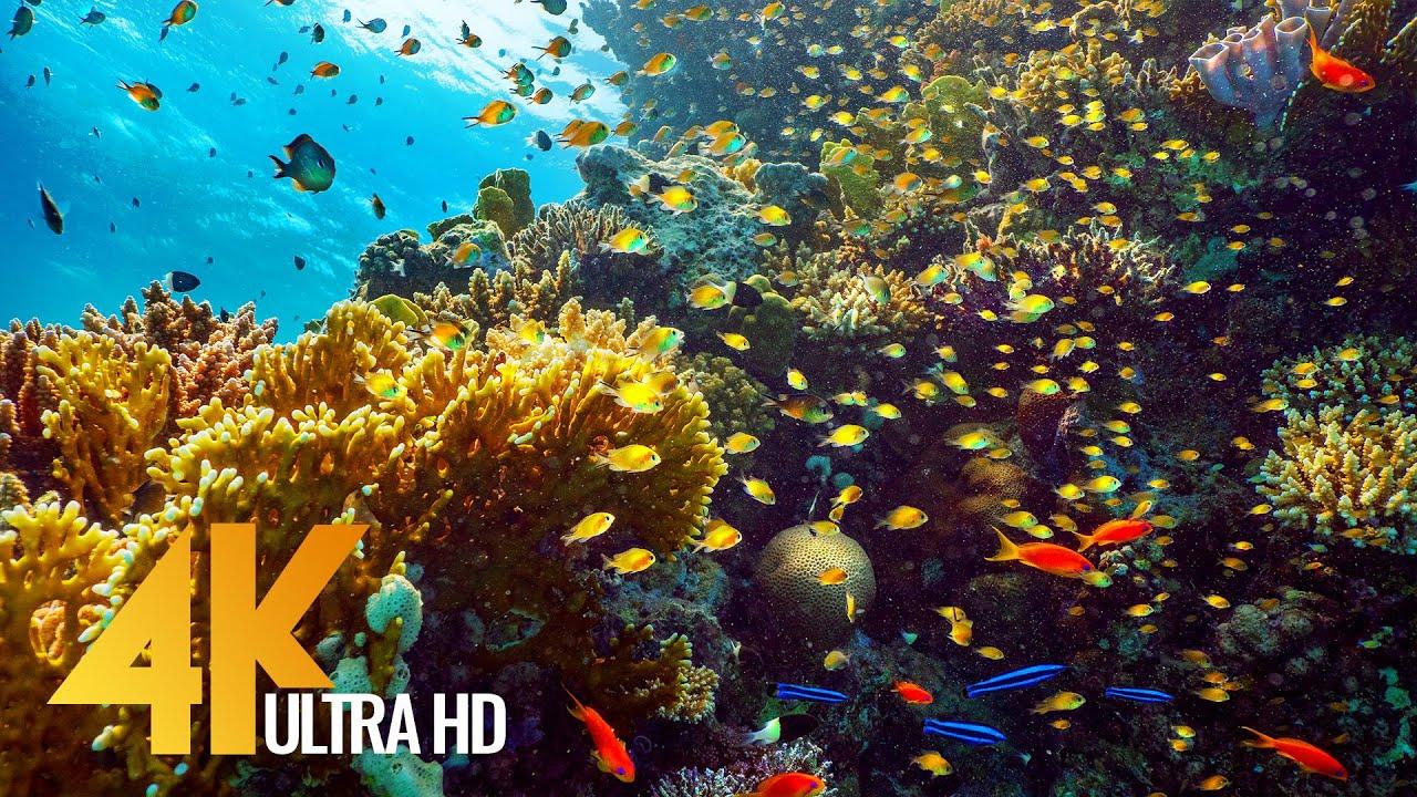 9 Hours of Red Sea Inhabitants - 4K Coral Reef World with Colorful Fish + Underwater Wonders - #2