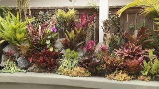 Small Tropical Bromeliad Garden, Carlsbad, USA