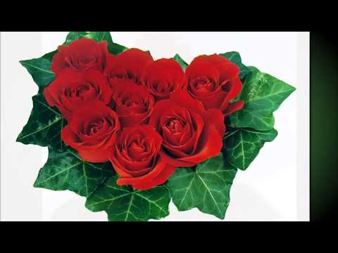 BOBY VINTON Rosses Are Red My Love