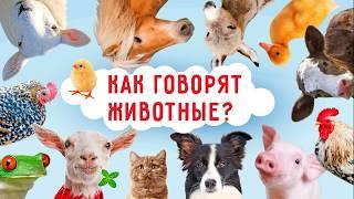 Как говорят животные   Видео для самых маленьких