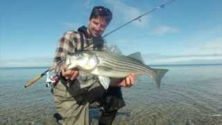 Fishing from Shore on Cape Cod for Striped Bass with Sebile Magic Swimmers