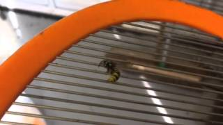 Defeating an angry Wasp