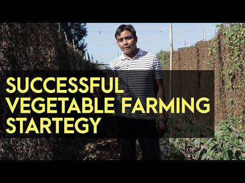 Ampalaya Farming: A successful farmer with a strategy and a business mindset