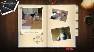 「ペット愛」オンライン ペット霊園