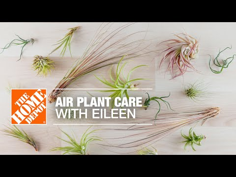 Air Plant Care with Eileen | Indoor House Plants | The Home Depot