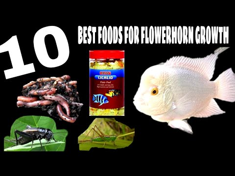 Best Flowerhorn Fish Foods