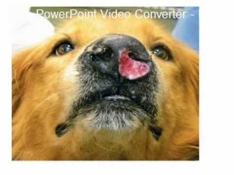 Canine and feline nasal tumors.mov