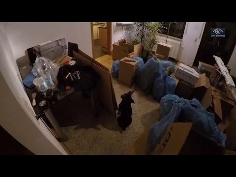 Переезд в новую квартиру =Ulm=