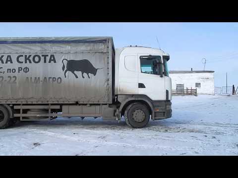 Скотовоз (перевозка крс, свиней, лошадей)