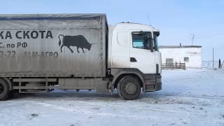 видео Продажа полуприцепов-скотовозов . Купить полуприцепы-скотовозы в Москве