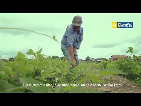 Programa Trabalhando na Roça beneficia agricultores de Arapiraca