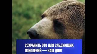 Наша природа - наше богатство. Сохранить экологию - долг каждого жителя России
