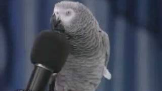 Parrot make some funny voices XD