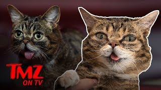 Internet Sensation Cat, Lil BUB, Dead At 8 | TMZ TV