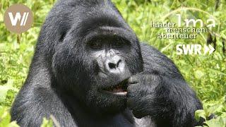 Berggorillas | Ugandas sanfte Riesen - Länder Menschen Abenteuer (SWR)