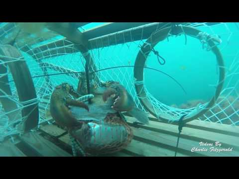 Lobster fishing May 2016