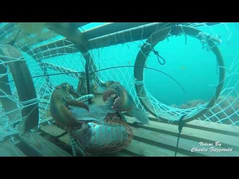 Lobster fishing May 2016 thumbnail