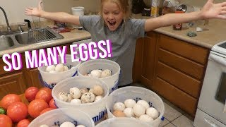 Two Methods of Preserving an Abundance of Eggs