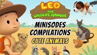 Leo the Wildlife Ranger Season 1 Minisodes Compilations - Cute Animals