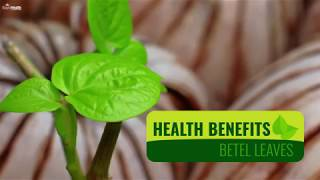 Health Benefits of Betel Leaves | Health Solution | Health Benefits