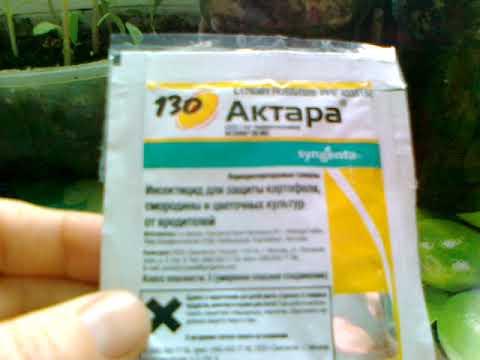 Актара - долговременная защита ваших растений