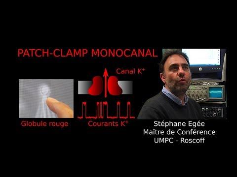 Interview de Stéphane Egée Patch clamp  Station Biologique de Roscoff