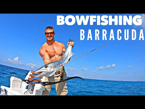 Barracuda Bowfishing! | Bowmar Bowhunting |