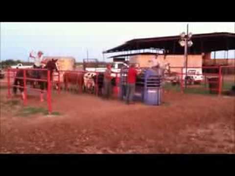 roping horse for sale, Laredo Tx