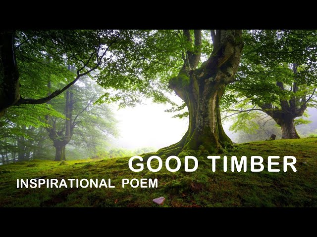 🆕good timber poem lds 👉 good timber poem by douglas malloch top video