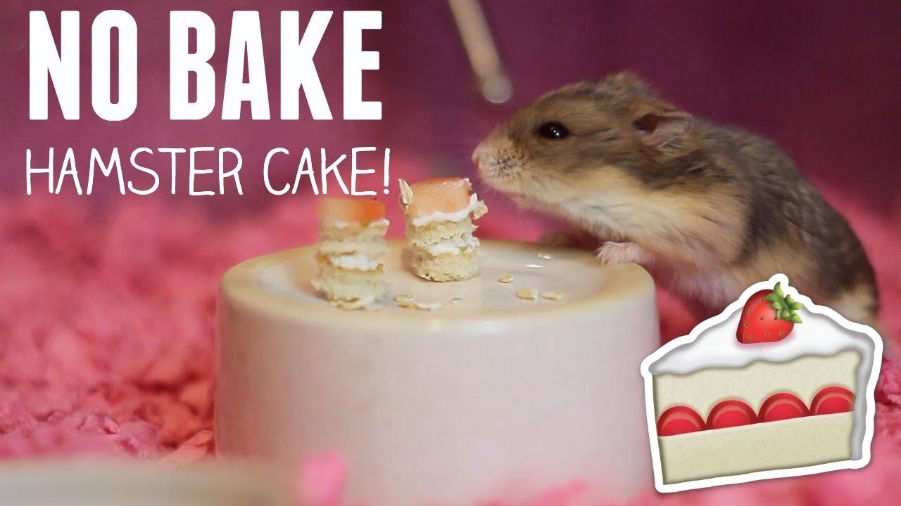 No Bake Hamster Cake Super Easy Youtube