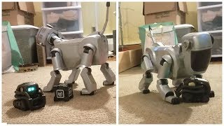 anki vector plays with aibo ers-111 [ & an exciting announcement! ]