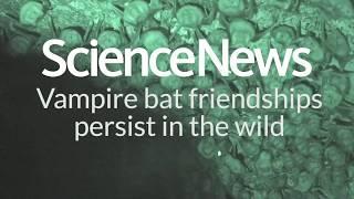 Vampire bat friendships persist in the wild | Science News