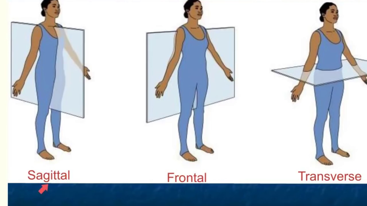 Anatomical Position And Directional Terms Youtube