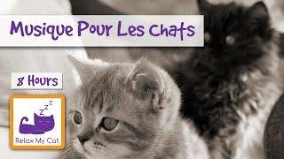 Musique de relaxation pour votre chat ou chaton
