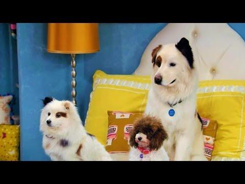 Собака точка ком (Сезон 3 Серия 1)