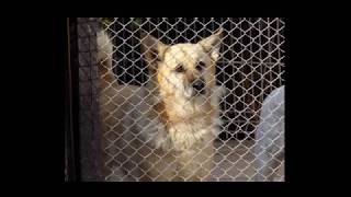 Schronisko dla bezdomnych zwierząt w Elblągu