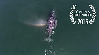 Exploring Baja California Sur from above 4K