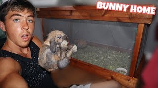 worlds-cutest-bunny-gets-new-home-diy
