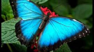 Melly Goeslaw - Tanyakan Pada Rumput Yang Bergoyang (New song 2011)