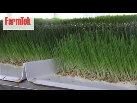 Fodder Tips - Harvesting Fodder in FodderPro 3.0 Commercial Feed System