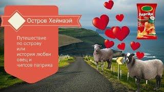 Остров Хеймаэй Исландия / Овцы преследуют туристов(Хеймаэй небольшой остров неподалеку от Исландии. Приглашаю вас в увлекательное путешествие по этому остро..., 2015-06-19T12:30:02.000Z)