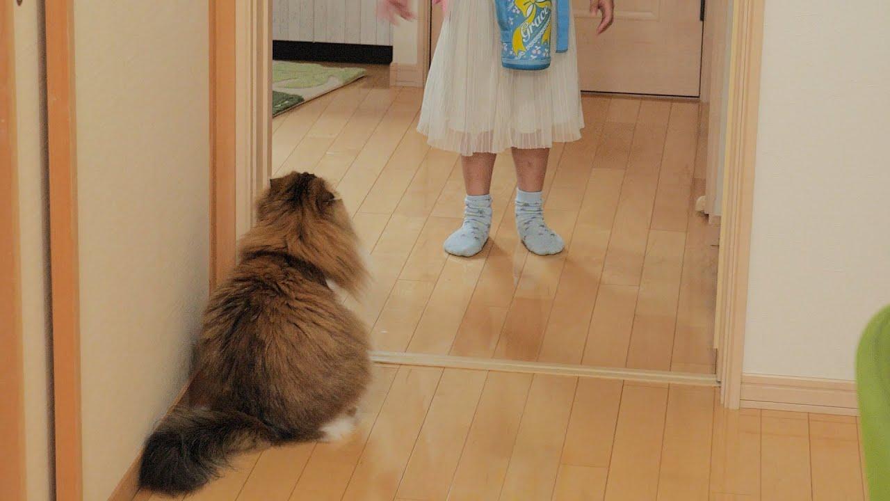 娘達の帰りを玄関でずっと待って疲れを癒してくれる猫
