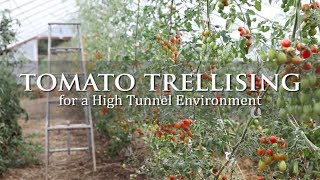 Tomato Trellising for a High Tunnel Environment