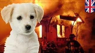 Dog causes house fire by chewing through Lynx deodorant can