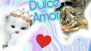 Blanca 😻 - Dulce Amor Pucca  ft.Pequeño (Versión Gatos :3) - Estrella A.23 ;u 😍