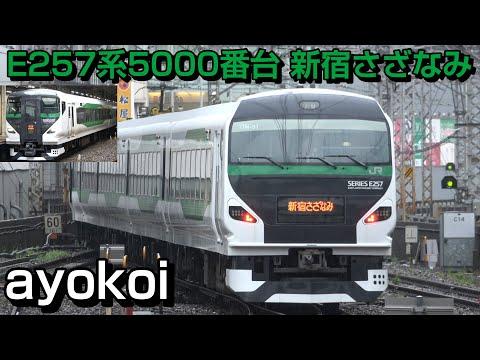 緑のE257系 波動用5000番台 OM-91編成 特急新宿さざなみ