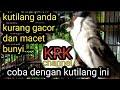Kutilang Gacor Berkicau  Mp3 - Mp4 Download