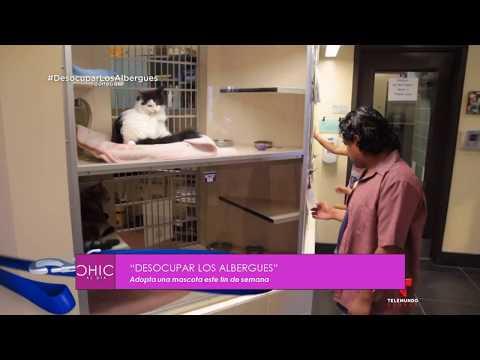 Roban Animales del zoológico para comerlos – Chic al día 18-08-2017 Seg. 01