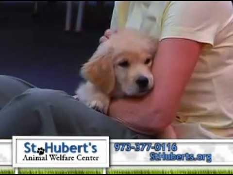 St. Hubert's Dog Training School Commercial